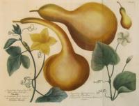 Cucurbita longa folio molli flore albo, calbasse. Cucurbita flore luteo folio aspero fructu albo. Cucurbita retortaeformis, Concorde, Citrullen. Cucurbita lagenaria Americana major. N. 442.