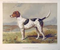 Foxhound (archer).