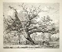 """The Conthorpe Oak"""