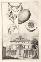"Palazzo del N.H. Sagredo a Fiesso. ""Spadafora Regina"""