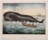 Baleine. (Navire a la pêche de la baleine)