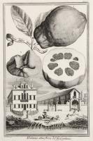 Palazzo alla Mira del fig:Capitaio (su nastro nell'incisione: Limon Dolce multiforme)