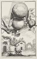 La Chiusa di Casalecchio sul Reno grande di Bologna (su nastro nell'incisione: Limon Dolce multiforme)