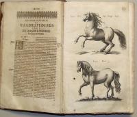 Historia Naturalis de quadrupetibus libri … Francoforti ad Moenum impensis Haeredum Math: Meriani; s.d. (Unito a:) Historiae Naturalis de Auibus libri VI…