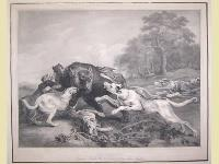 Baerenhatze (caccia all'orso).
