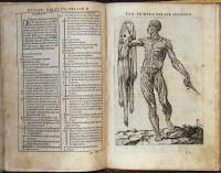 Historia de la composicion del cuerpo humano.