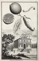 Pal:zo dell. N.H. Bembo alla Mira (su nastro nell'incisione: Limon Da Canea)