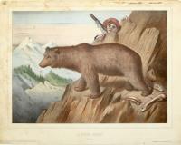L'Ours Brun (Pyrénees)